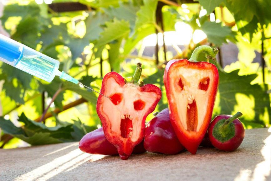 ГМО-новости. Всё плохо, всё отравлено.