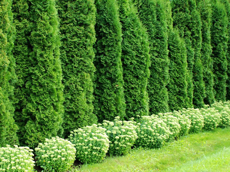Озеленение участка: сложно ли это?