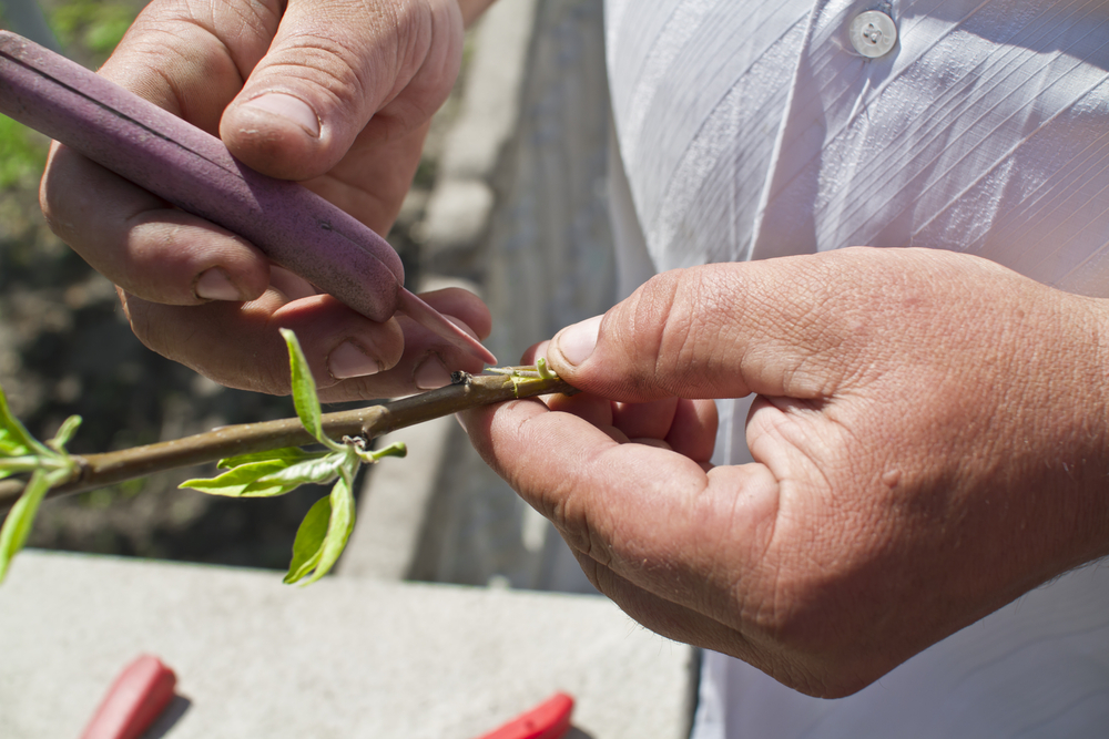 Семена и черенки только из своего хозяйства